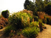 Ornamental Grass Gardens