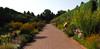 O'Fallon Perennial Walk