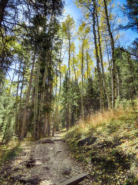 Devil's Head Trail #611