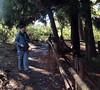 Hosmer Grove - Haleakalā Hiking - Maui