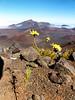 Haleakalā National Park - Sliding Sands Trail - Maui