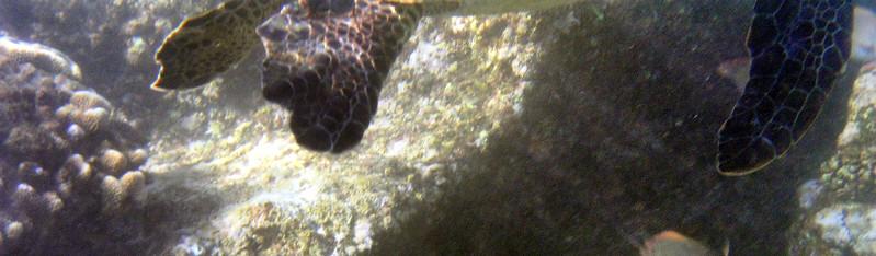 Snorkel at Black Rock