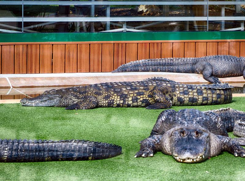 Reptile Gardens - June 13, 2017 - GATOR SHOW