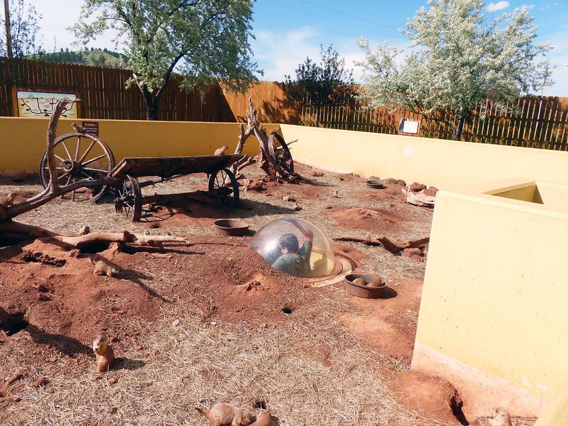 Reptile Gardens - June 13, 2017 - PRAIRIE DOG TOWN