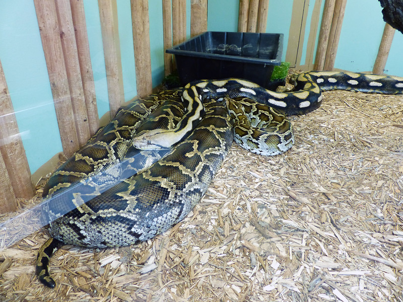 Reptile Gardens - June 13, 2017  - BIG DOME