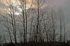 Black River Riparian Forest