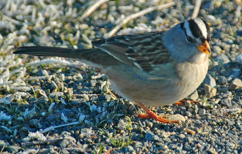 Nisqually National Wildlife Refuge - January 25, 2008