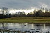 Nisqually National Wildlife Refuge - December 25, 2007