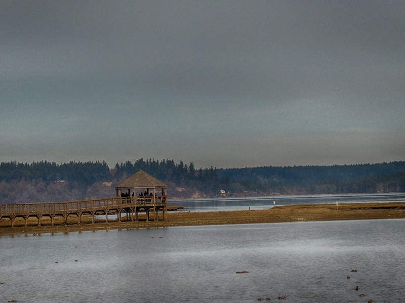 Nisqually National Wildlife Refuge - March 16, 2019