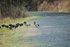 Nisqually National Wildlife Refuge - December 25, 2007