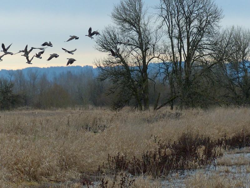 Ridgefield National Wildlife Refuge - Washington state