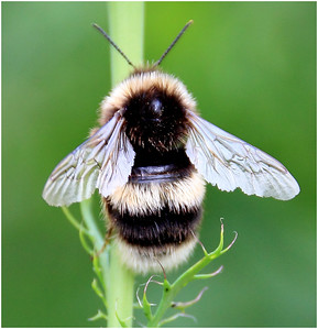 Bee Foraging