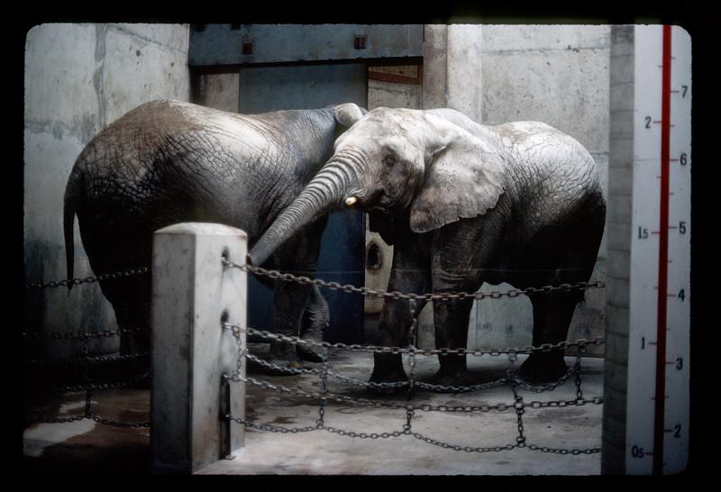 Elephants at the Buffalo Zoo.