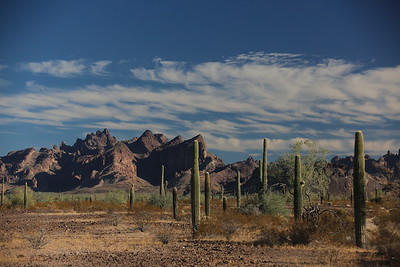 Kofa Nat Wildlife Refuge Nov 4 2017