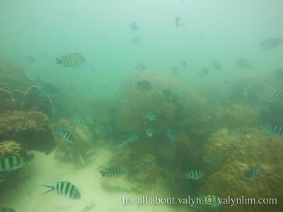 Koh Samui - Marine park day trip