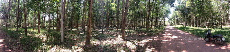 Road passing through rubber trees on Koh Jum