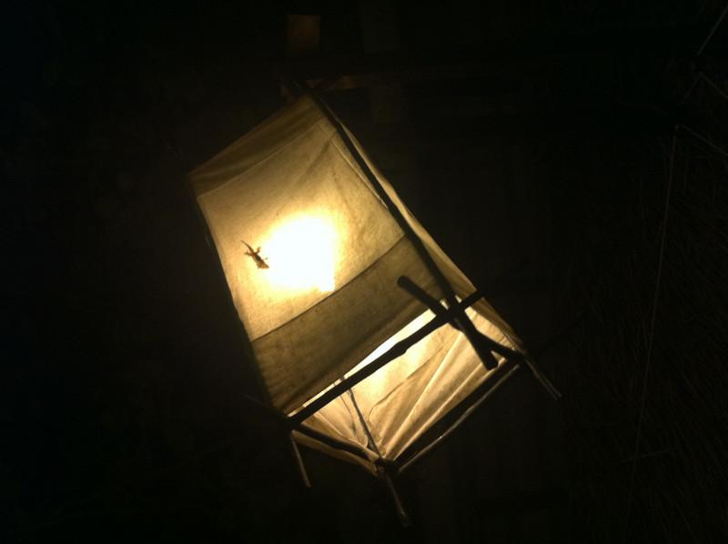Geckos on lamp, Time For Lime restaurant
