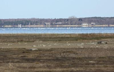 Matsalu lahe põhjakallas
