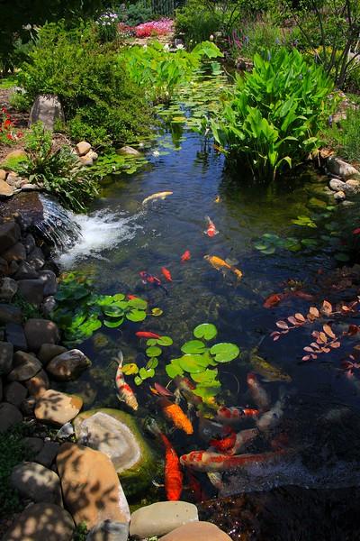 Koi Pond, Waterfall and Garden