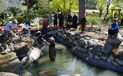 Koi return to Deer Park pond