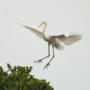 Florida Birds 5/13