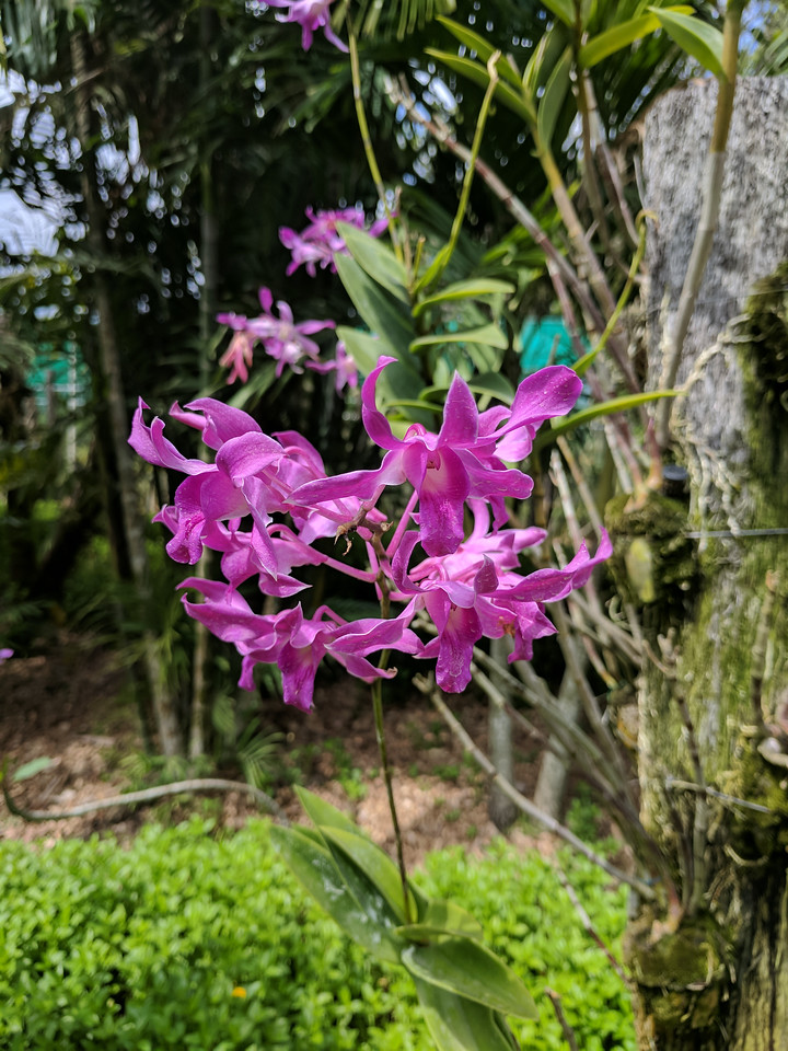 There are lots of Orchids here