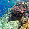 Typical coral reef in Komodo National Park