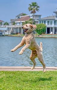 C'mon Papa, throw it!!