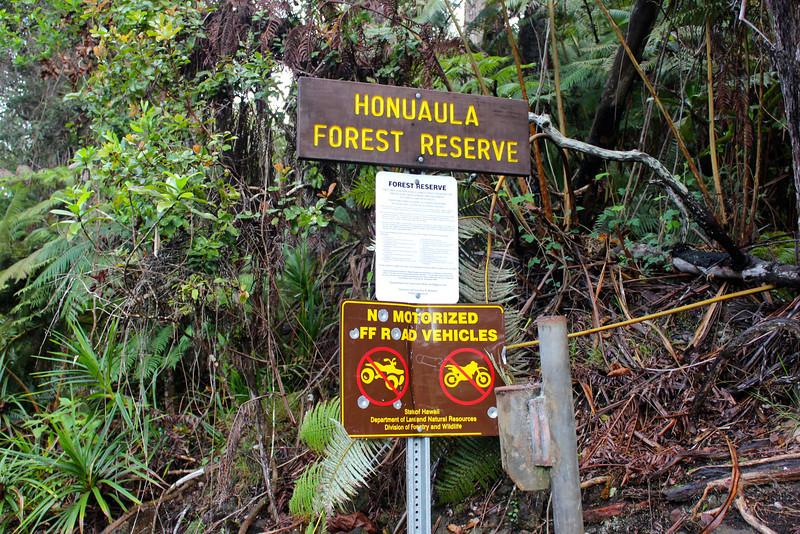 Kids camp in rainforest trail adventure