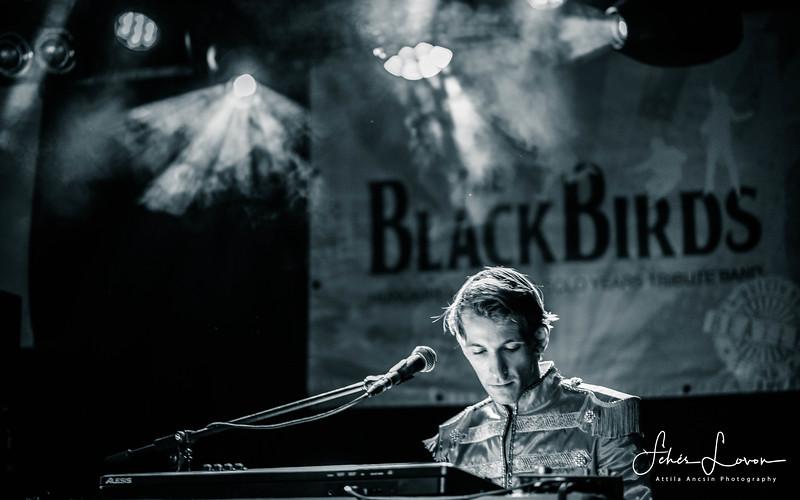 www.blackbirds.hu