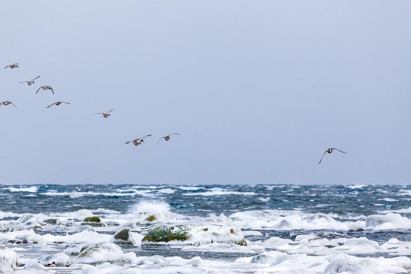 Tosteberga: Havet i vinterskrud