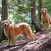 Smallwood Trail - with Sadie and Stanley
