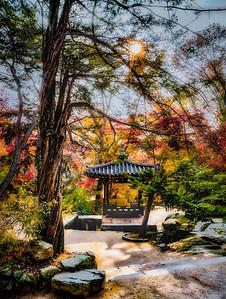 2016-11-08_Biwon_NSoyo-jeong_Sunburst_Pine_AHDR1435-