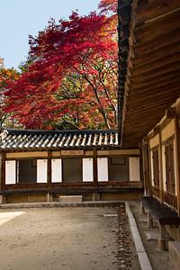 2016-11-08_Biwon_Yeongyeong-dang_MapleTree_AHDR1230-1701