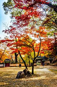2016-11-08_Biwon_OrangeTrees_AHDR1712-