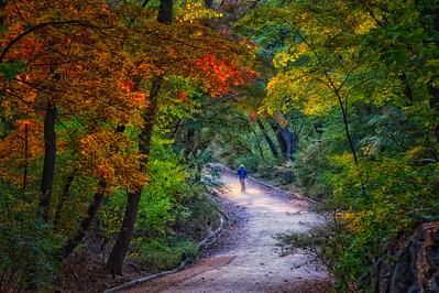 2015-11-03_Biwon_ForestPathMan_HDR-3175-
