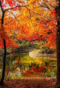 2016-11-08_Biwon_Gwallam-ji_Leaves_AHDR1285-
