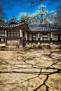 2016-04-08_Biwon_Yeongyeongdang_Sakura_AuroraHDR-8708-