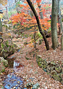 2010-11-13_Damyang-6236Sosweiwon_Trees_and_Stream