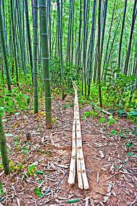 2010-11-13_Damyang-6360Juknogwon_split_bamboo