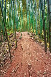 2010-11-13_Damyang-6351Juknogwon_bamboo_path