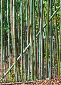 2010-11-13_Damyang-6317Jugnogwon_Bamboo