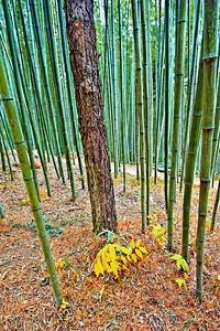2010-11-13_Damyang-6358Juknogwon_tree_among_bamboo