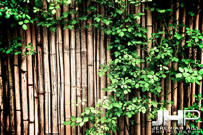"""Bamboo"", Bundang, South Korea, 2008 Print KOR3-518-015V2"