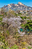 2017-04-12_Seoul_Bugak_SpringBloom_AHDR4119-