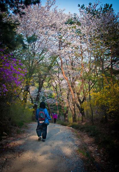 2013-04-21_Seoul_Namsan_SpringBlossoms_YeriOnTrail-8031