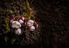 2013-04-21_Seoul_Namsan_SpringBlossoms_cherry buds-8012
