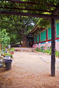 Temple tree-2869web800