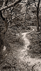 ForestPath_PanoramaMonoUnsharpened