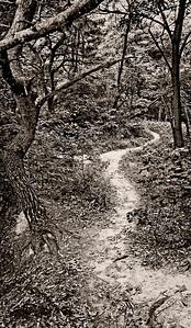 ForestPath_PanoramaMonoUnsharpened
